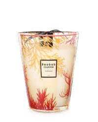 baobab collection andromeda coral candle