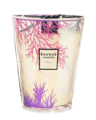 baobab collection perseus coral candle